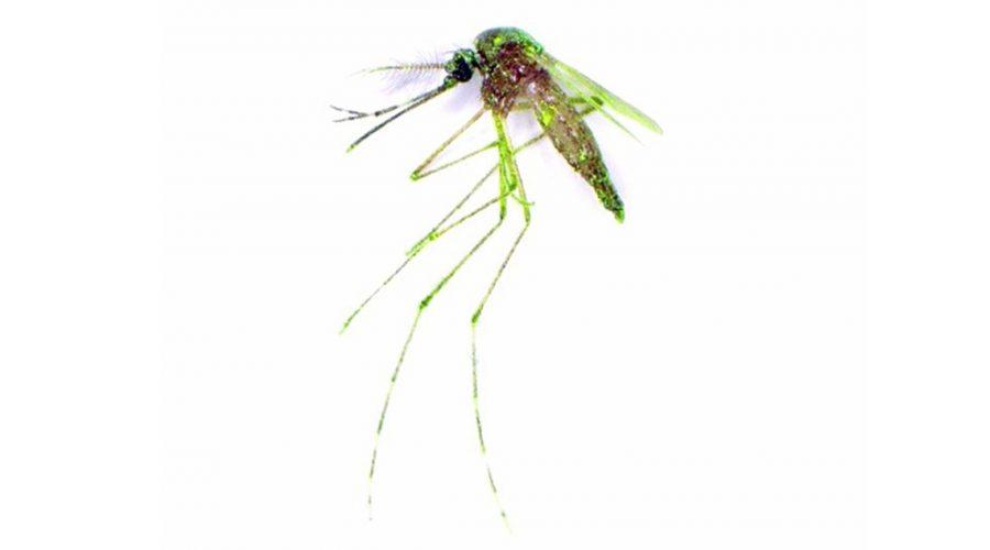 aedes-albopictus-mosquito-1140x640.jpg
